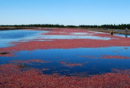 Une industrie bioalimentaire prospère sur la Côte-Nord