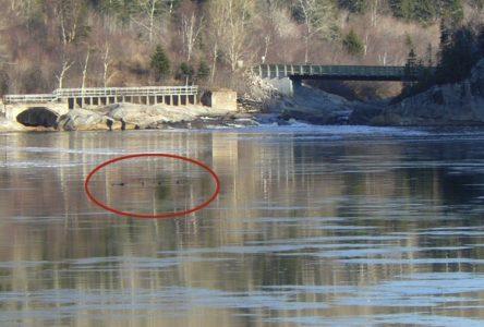 Accident d'Alexis Santerre : Hydro-Québec exonérée de tout blâme