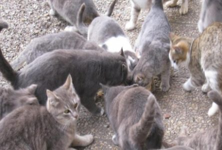 Problème de chats errants à Baie-Trinité