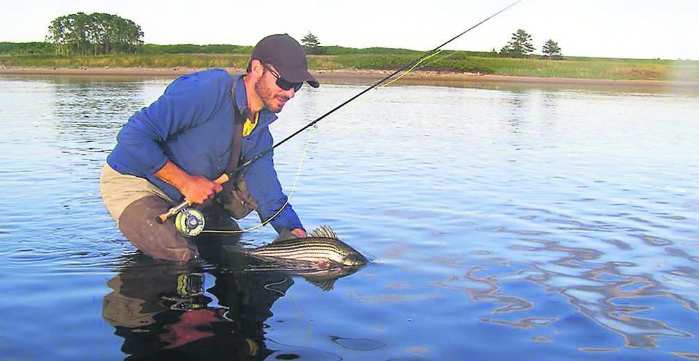 La pêche au bar rayé de nouveau permise