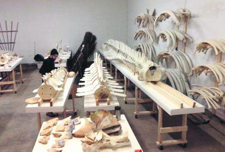 Le Centre de recherche sur les mammifères marins sera plus spacieux