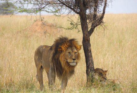 Les Aventuriers Voyageurs : la Tanzanie à l'honneur