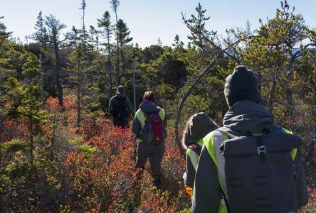 Trois jeunes recherchés pour une expédition scientifique