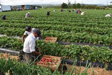 COVID-19 : Ottawa subventionne les coûts de la quarantaine des travailleurs étrangers temporaires