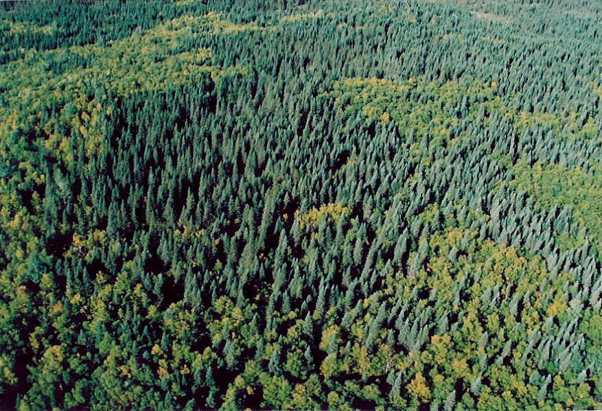 Le maire Montigny réclame un sommet sur l'industrie forestière