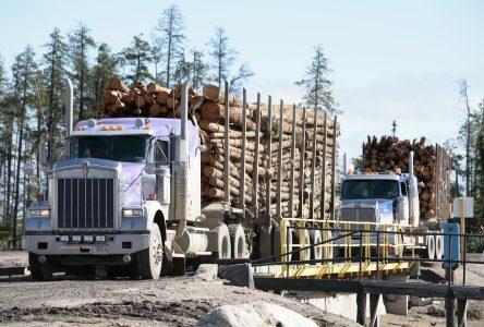 PFR reprend ses opérations forestières