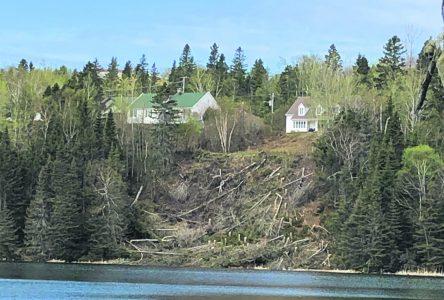 La source d'eau de Forestville menacée par une coupe d'arbres illégale