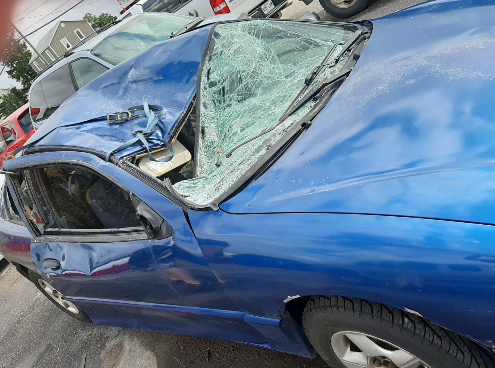 Collision avec un orignal : « Mes <i>brakes</i> ont crié, puis ç'a fait paf! »