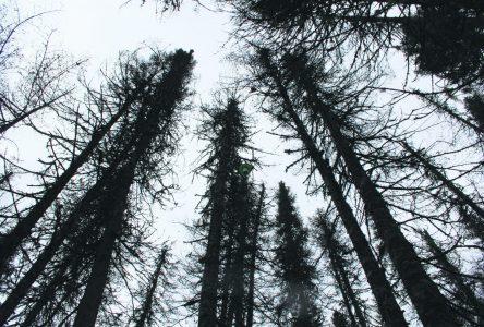 Beaucoup de déceptions autour de la révision du régime forestier