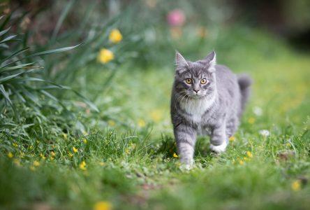 Les chats errants, un fléau à Pointe-Lebel